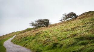 Uwaga na porywisty wiatr. Prognoza zagrożeń IMGW