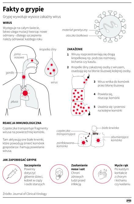 Fakty o grypie (PAP/Maciej Zieliński, Adam Ziemienowicz)