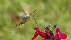 © Thomas Easterbrook - Wildlife Photographer of the Year