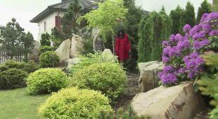 Najpierw ogród, potem dom (odc. 512)