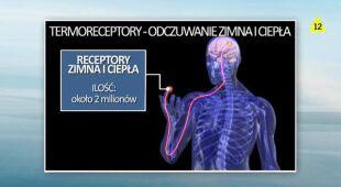 Termoregulacja człowieka